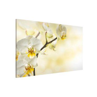 Lavagna magnetica - Orchid Branch - Formato orizzontale 3:2