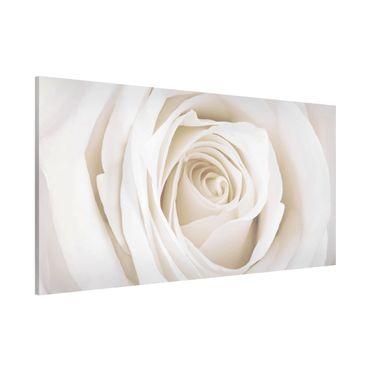 Lavagna magnetica - Rose Picture Pretty White Rose - Panorama formato orizzontale