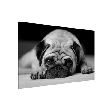 Lavagna magnetica - Pug Loves You II - Formato orizzontale