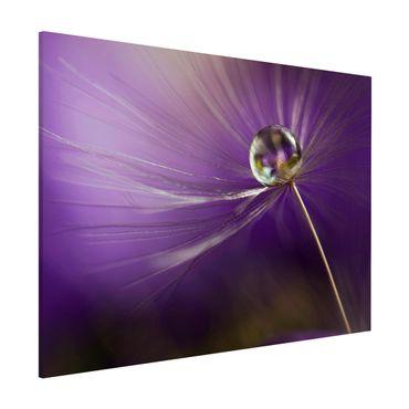 Lavagna magnetica - Dandelion in Violet - Formato orizzontale 3:4