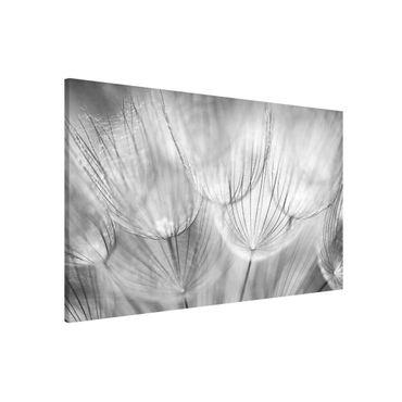 Lavagna magnetica - Dandelions Macro Shot In Black And White - Formato orizzontale