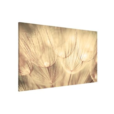 Lavagna magnetica - Dandelions Close-Up In Sepia Tones Homely - Formato orizzontale