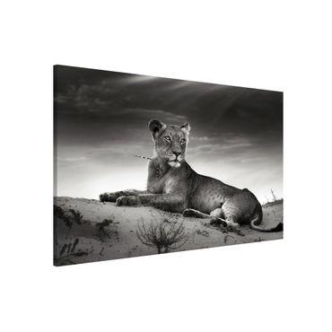 Lavagna magnetica - Resting Lion - Formato orizzontale