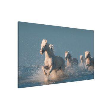 Lavagna magnetica - White Horses - Formato orizzontale 3:2