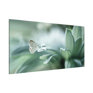 Lavagna magnetica - Farfalla E Gocce di rugiada In Pastel Verde - Panorama formato orizzontale