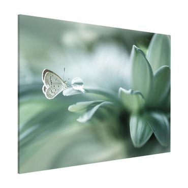 Lavagna magnetica - Farfalla E Gocce di rugiada In Pastel Verde - Formato orizzontale 3:4