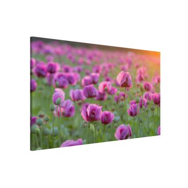 Lavagna magnetica - Purple Poppy Flower Meadow In Spring - Formato orizzontale