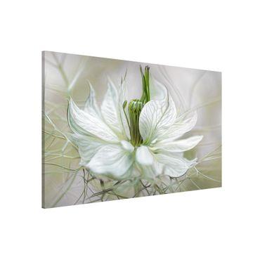 Lavagna magnetica - White Nigella - Formato orizzontale 3:2