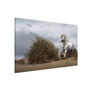 Lavagna magnetica - White Horse in the Dunes - Formato orizzontale 3:2