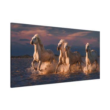Lavagna magnetica - Cavalli selvaggi in Kamargue - Panorama formato orizzontale