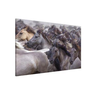 Lavagna magnetica - Wild Horses - Formato orizzontale 3:2