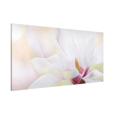 Lavagna magnetica - Delicate Magnolia Blossom - Panorama formato orizzontale