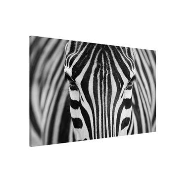 Lavagna magnetica - Zebra Look - Formato orizzontale 3:2