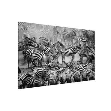 Lavagna magnetica - Zebra Herd II - Formato orizzontale