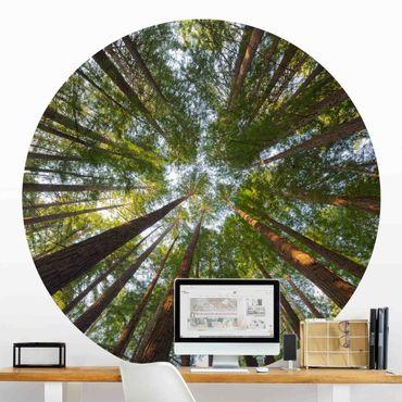 Carta da parati rotonda autoadesiva - cime degli alberi Sequoia