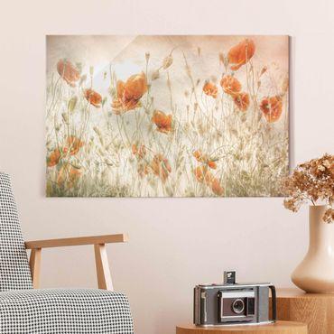 Quadro in vetro - Papaveri e erbe delicate nel campo