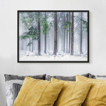 Poster con cornice - Alberi di conifere in inverno