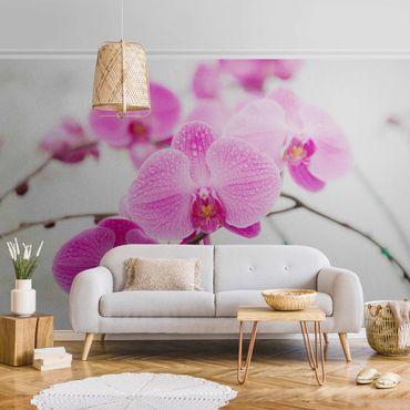 Carta da parati metallizzata - Primo piano orchidea