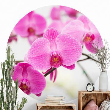 Carta da parati rotonda autoadesiva - Chiudi orchidea