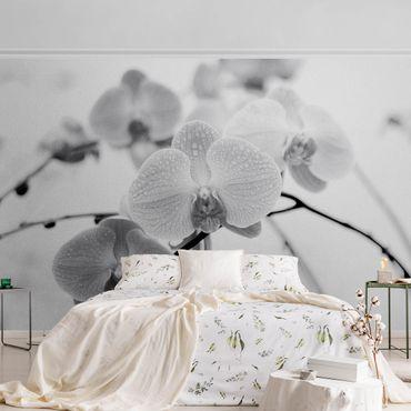 Carta da parati metallizzata - Dettaglio di orchidea in bianco e nero