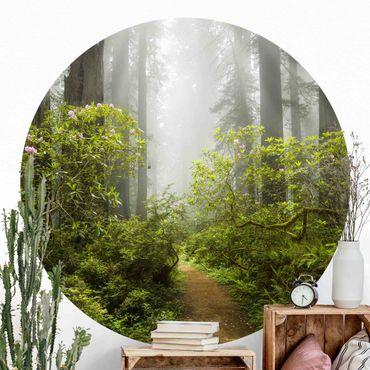 Carta da parati rotonda autoadesiva - sentiero nel bosco nebbioso