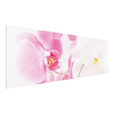 Quadro in forex - Delicate Orchids - Panoramico
