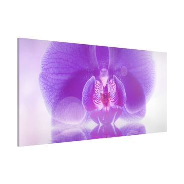 Lavagna magnetica - Orchids Picture Purple Orchid On Water - Panorama formato orizzontale