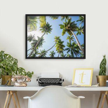 Poster con cornice - palme