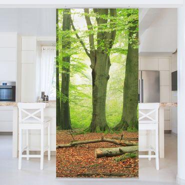 Tenda a pannello Mighty Beech Trees 250x120cm