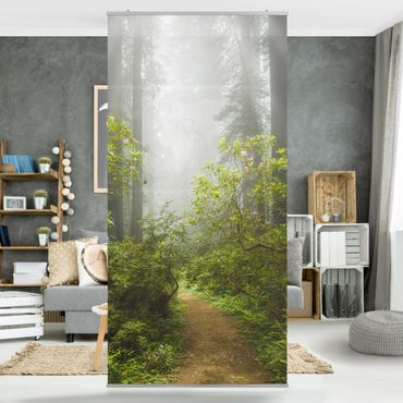 Tenda a pannello - Misty forest path 250x120cm