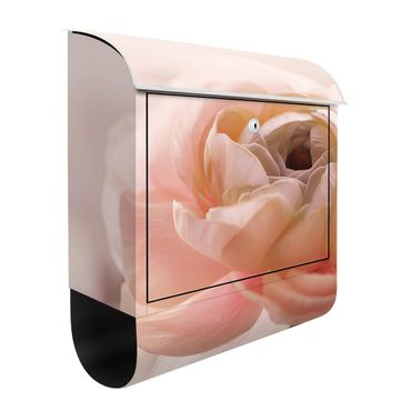 Cassetta postale - Focus su fioritura rosa