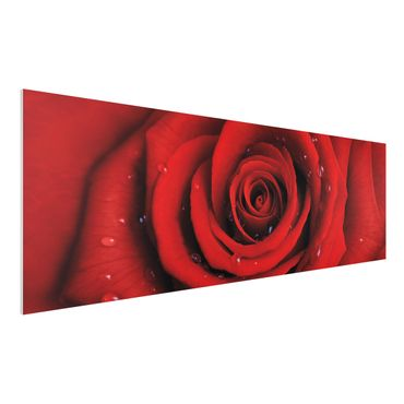 Quadro in forex - Red rose with water drops - Panoramico