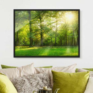 Poster con cornice - Cammina nei boschi