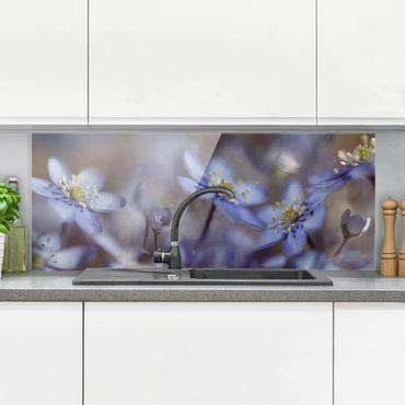 Paraschizzi in vetro - Anemoni in Blu - Panoramico