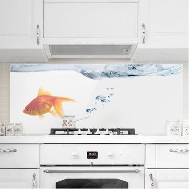 Paraschizzi in vetro - Goldfish - Panoramico