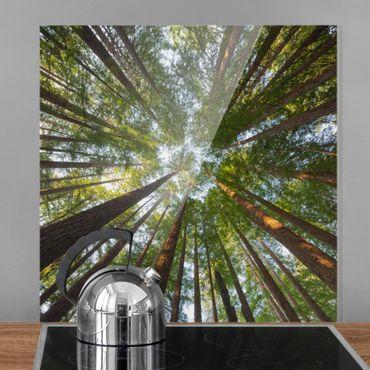 Paraschizzi in vetro - Sequoia Tree Tops - Quadrato 1:1