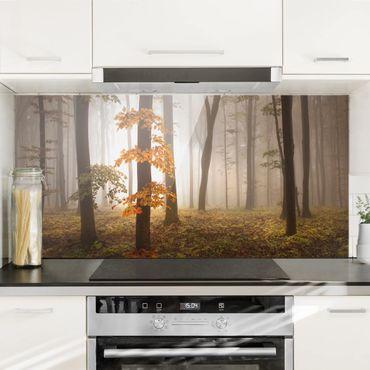 Paraschizzi in vetro - Foresta Novembre - Orizzontale 1:2