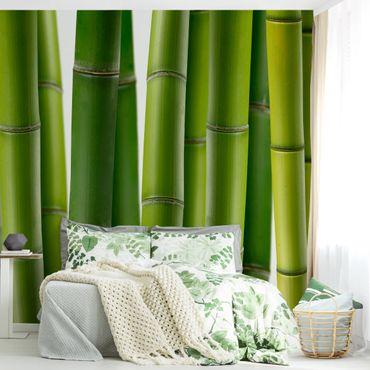 Carta da parati - Bamboo Plants