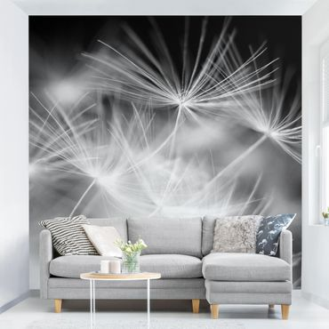 Carta da parati - Moving Dandelions close up on black background