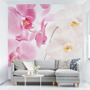 Carta da parati - Delicate Orchids