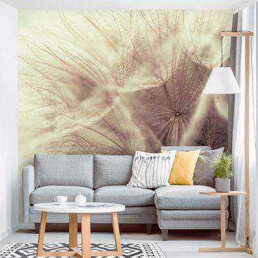 Carta da parati - Detailed dandelions macro shot with vintage blur effect