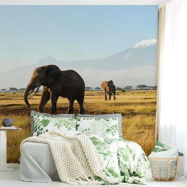 Carta da parati - Elephants in front of the Kilimanjaro in Kenya