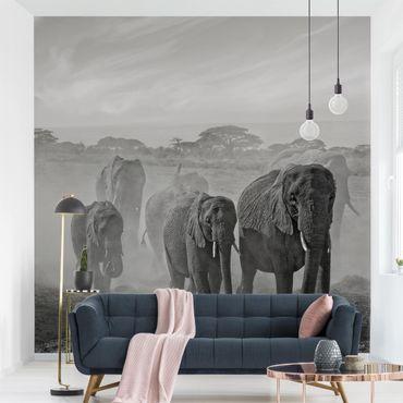 Carta da parati - Branco di Elefanti
