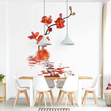 Carta da parati - Orchidea rossa sull'acqua