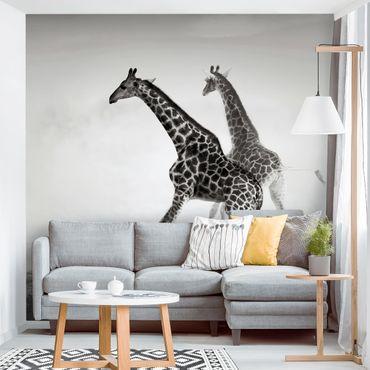 Carta da parati - Giraffe Hunting