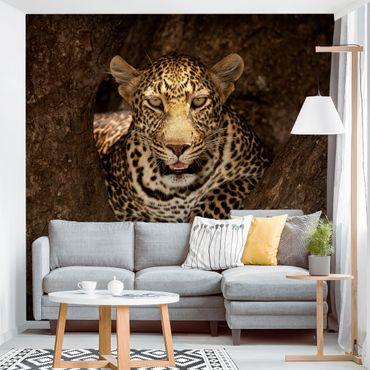 Carta da parati - Leopardo riposo su un Albero