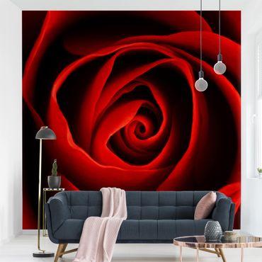 Carta da parati - Lovely Rose