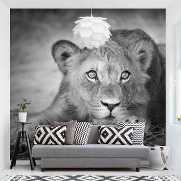 Carta da parati - Lurking Lionbaby
