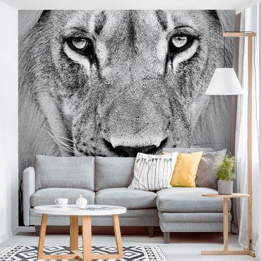 Carta da parati - Old Lion