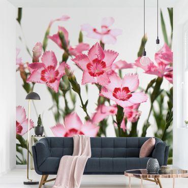 Carta da parati - Pink Flowers
